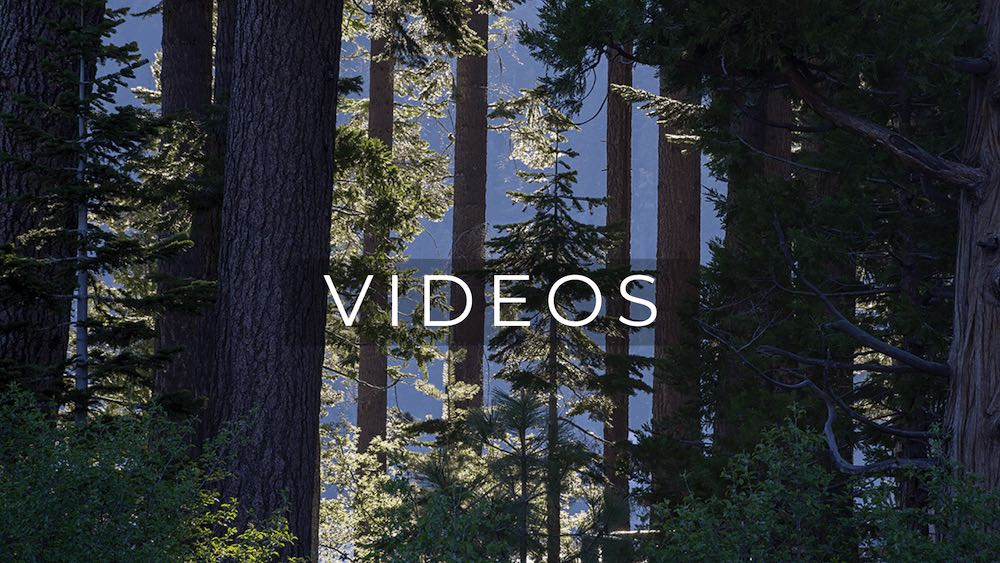 View through sunlit pine trees with word Video on top
