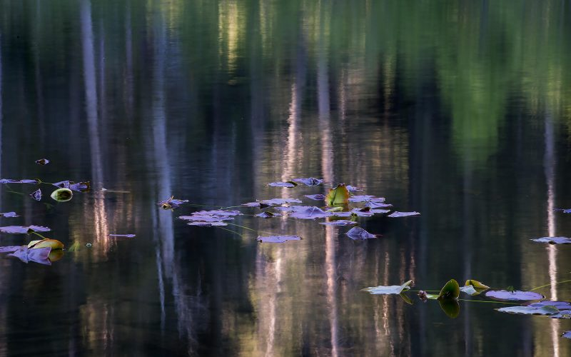 Dhruva_Lily_Lake.jpg