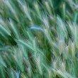 all-grass
