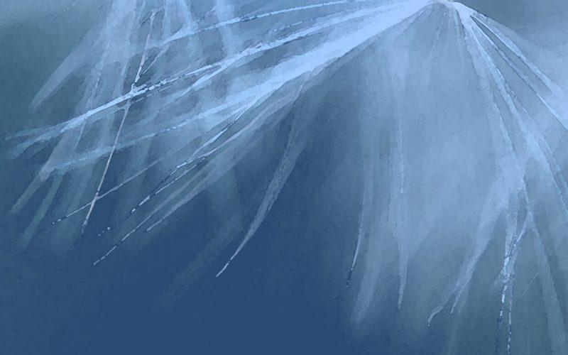 Dry-brushed image of dandelion on blue background