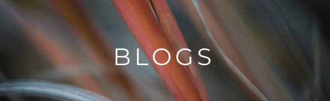 Red grasses with blogs title