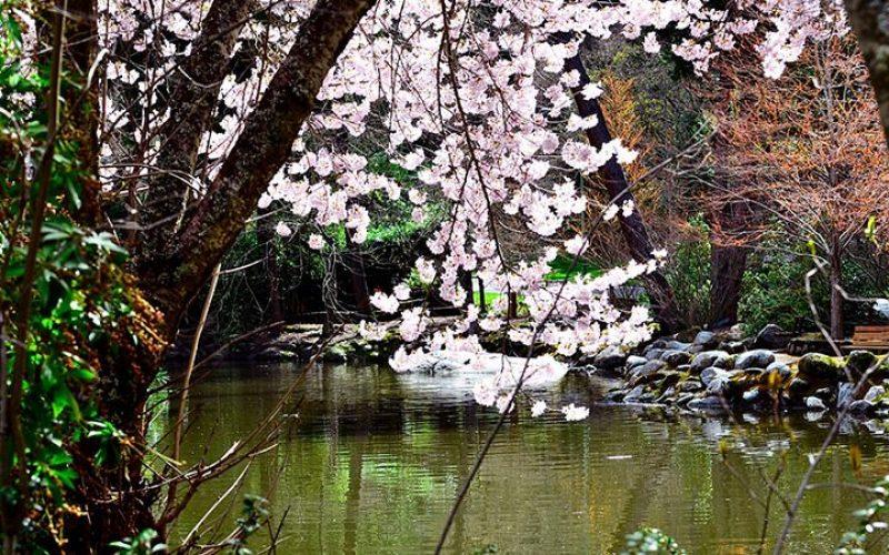 lithia-spring