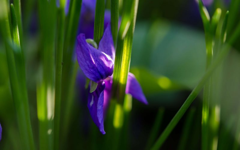 The Trap of the Measuring Stick with Purple Iris