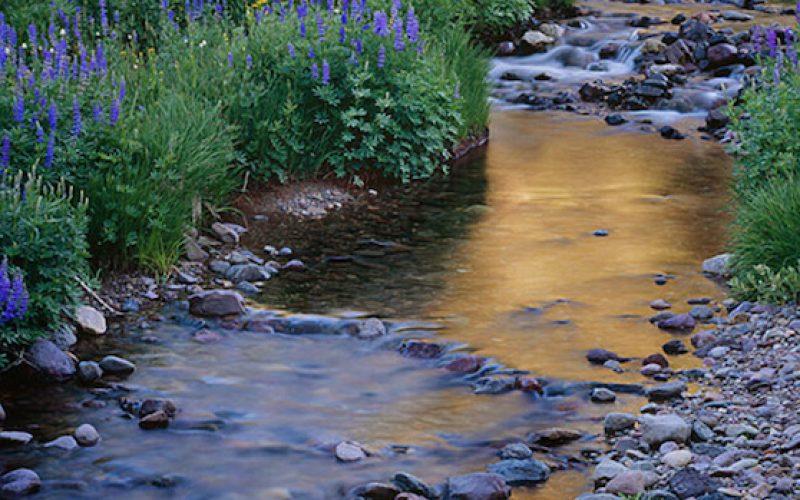 stream-blue-flower-public-meetings