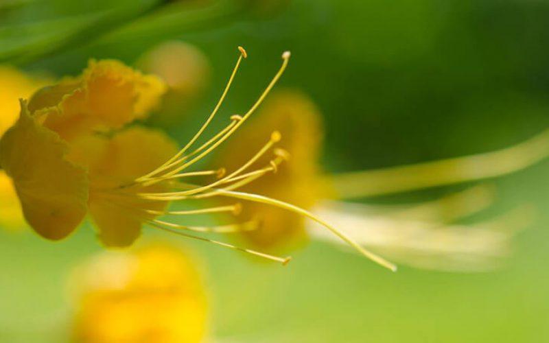 yellow-flower